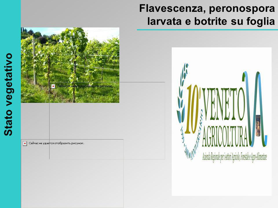 Stato vegetativo Flavescenza, peronospora larvata e botrite su foglia
