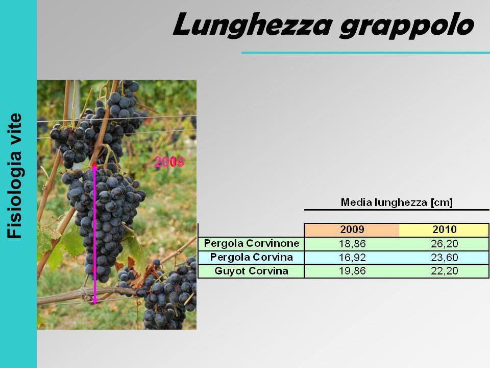 20092010 Fisiologia vite Lunghezza grappolo