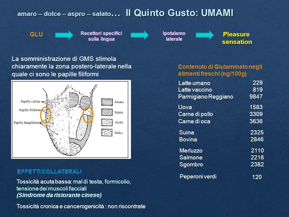 amaro – dolce – aspro – salato … Il Quinto Gusto: UMAMI GLU Recettori specifici sulla lingua Ipotalamo lateralePleasuresensation La somministrazione d