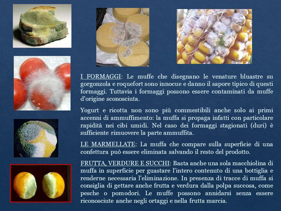 I FORMAGGI: Le muffe che disegnano le venature bluastre su gorgonzola e roquefort sono innocue e danno il sapore tipico di questi formaggi. Tuttavia i