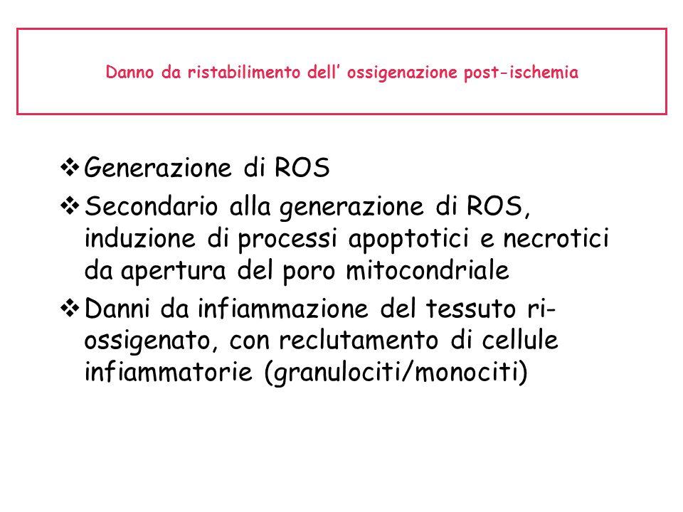 Danno da ristabilimento dell' ossigenazione post-ischemia  Generazione di ROS  Secondario alla generazione di ROS, induzione di processi apoptotici