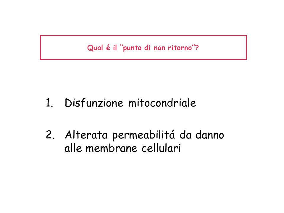"""Qual é il """"punto di non ritorno""""? 1.Disfunzione mitocondriale 2.Alterata permeabilitá da danno alle membrane cellulari"""