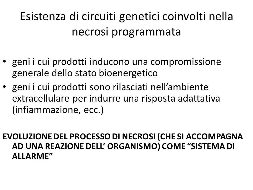 Esistenza di circuiti genetici coinvolti nella necrosi programmata geni i cui prodotti inducono una compromissione generale dello stato bioenergetico
