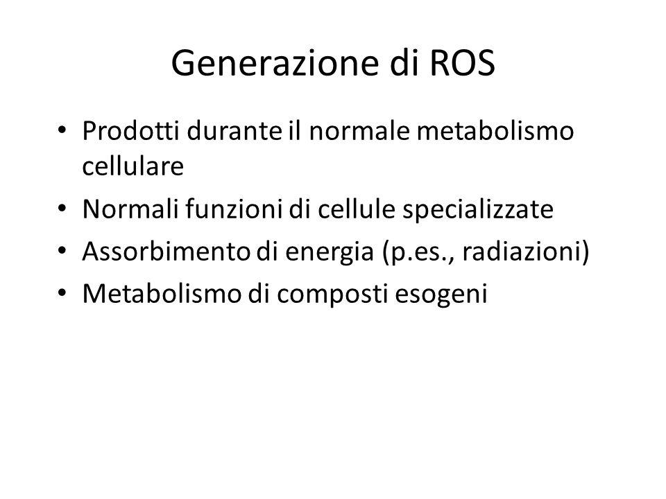 Generazione di ROS Prodotti durante il normale metabolismo cellulare Normali funzioni di cellule specializzate Assorbimento di energia (p.es., radiazi