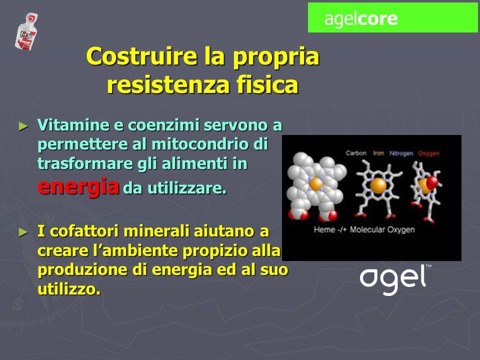 Costruire la propria resistenza fisica ► Vitamine e coenzimi servono a permettere al mitocondrio di trasformare gli alimenti in energia da utilizzare.