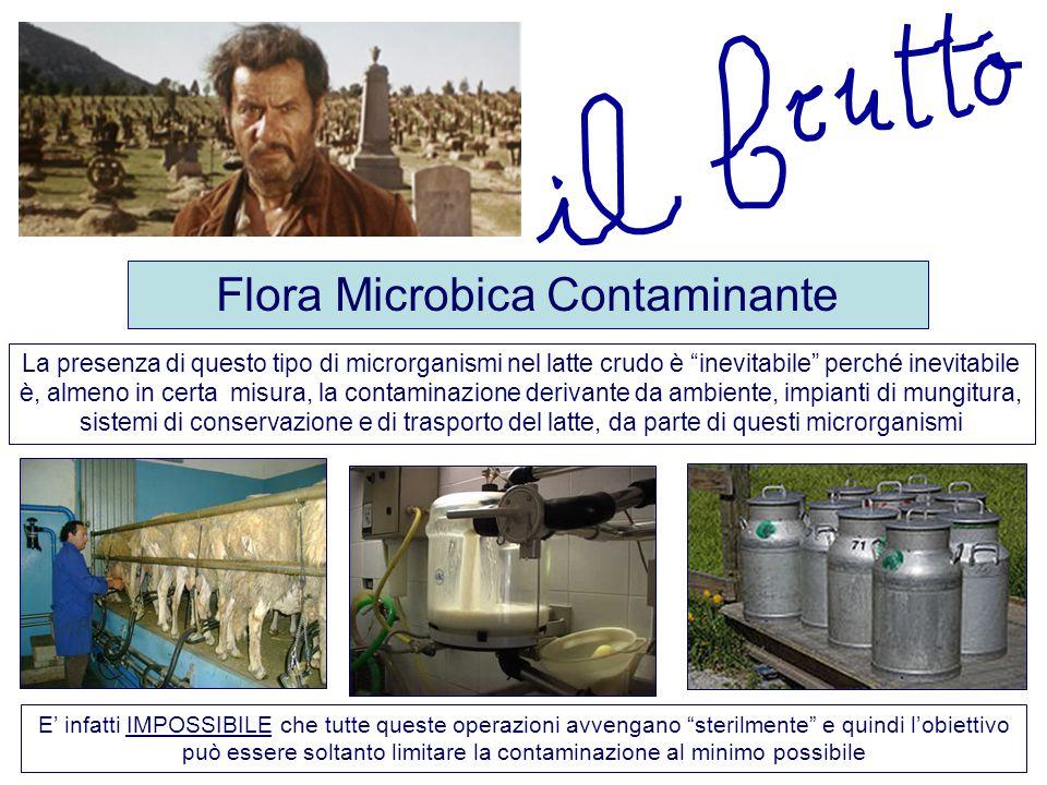 """Flora Microbica Contaminante La presenza di questo tipo di microrganismi nel latte crudo è """"inevitabile"""" perché inevitabile è, almeno in certa misura,"""