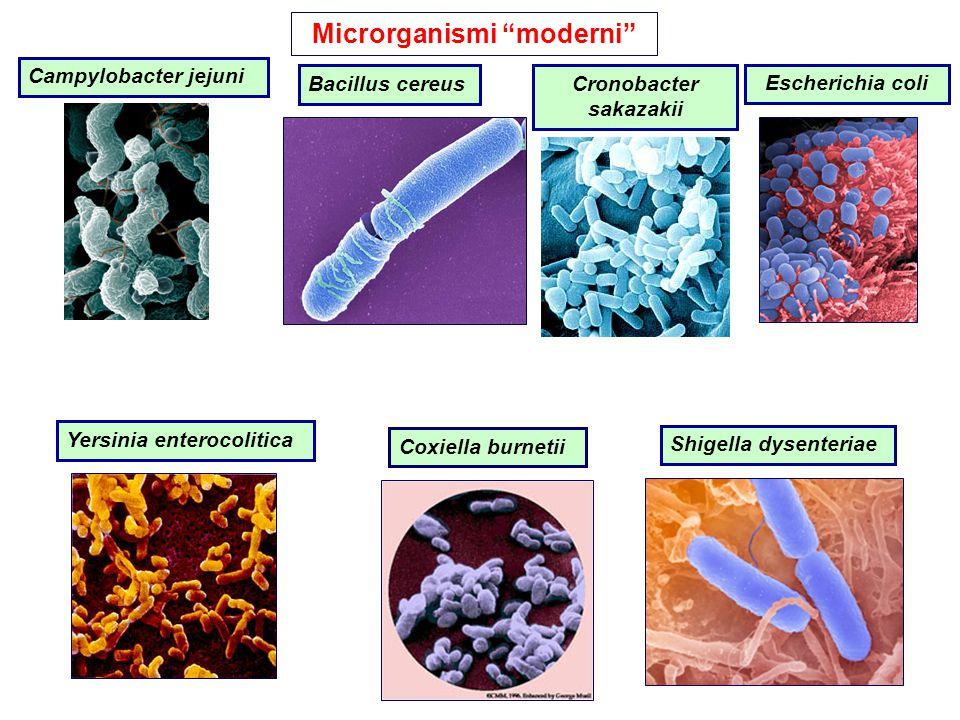 "Microrganismi ""moderni"" Shigella dysenteriae Coxiella burnetii Bacillus cereus Yersinia enterocolitica Escherichia coli Campylobacter jejuni Cronobact"