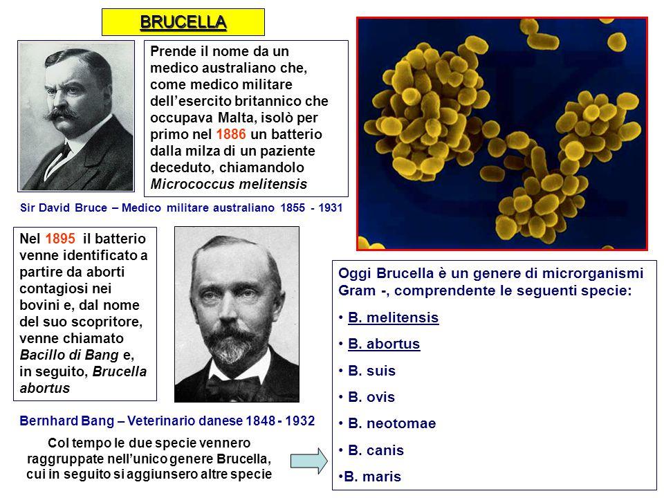 Sir David Bruce – Medico militare australiano 1855 - 1931 Bernhard Bang – Veterinario danese 1848 - 1932 Prende il nome da un medico australiano che,