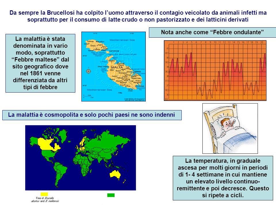 Da sempre la Brucellosi ha colpito l'uomo attraverso il contagio veicolato da animali infetti ma soprattutto per il consumo di latte crudo o non pasto