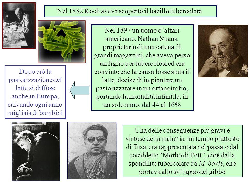 Nel 1882 Koch aveva scoperto il bacillo tubercolare. Dopo ciò la pastorizzazione del latte si diffuse anche in Europa, salvando ogni anno migliaia di