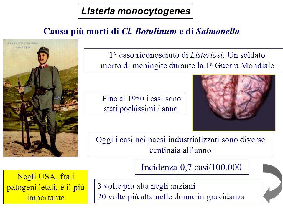 1° caso riconosciuto di Listeriosi: Un soldato morto di meningite durante la 1 a Guerra Mondiale Fino al 1950 i casi sono stati pochissimi / anno. Cau