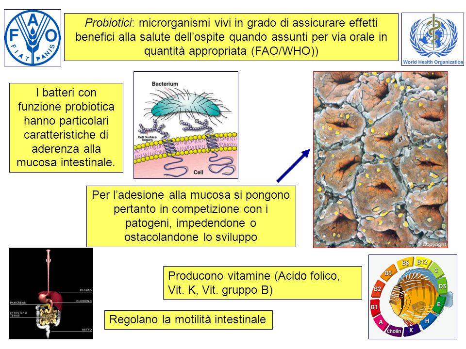I batteri con funzione probiotica hanno particolari caratteristiche di aderenza alla mucosa intestinale. Per l'adesione alla mucosa si pongono pertant
