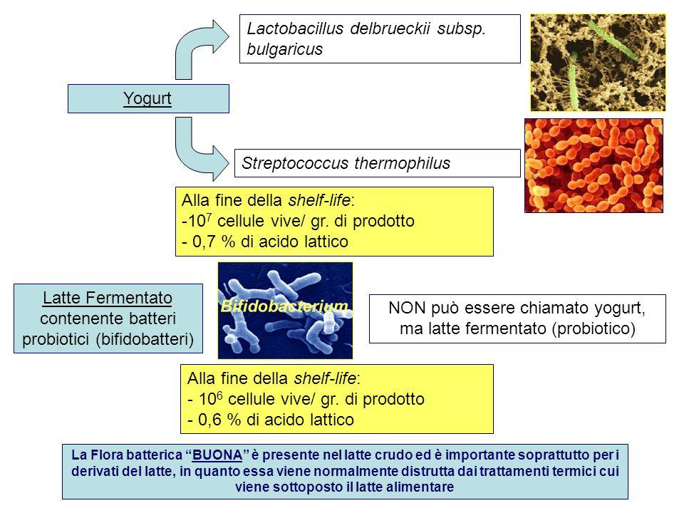 Yogurt Alla fine della shelf-life: -10 7 cellule vive/ gr. di prodotto - 0,7 % di acido lattico Streptococcus thermophilus Lactobacillus delbrueckii s