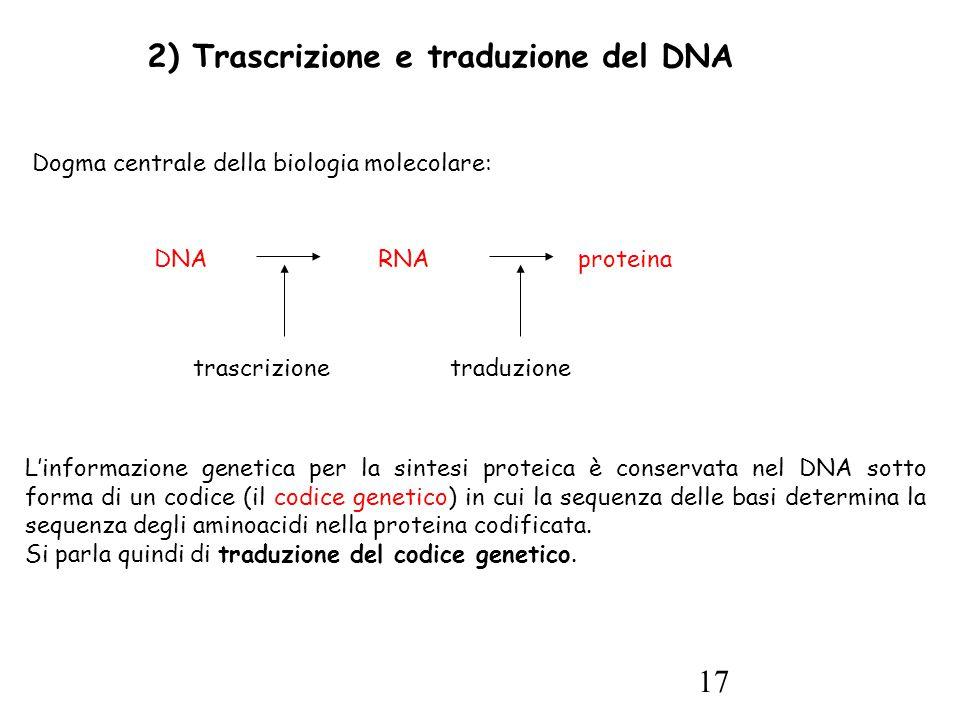 17 2) Trascrizione e traduzione del DNA Dogma centrale della biologia molecolare: L'informazione genetica per la sintesi proteica è conservata nel DNA sotto forma di un codice (il codice genetico) in cui la sequenza delle basi determina la sequenza degli aminoacidi nella proteina codificata.