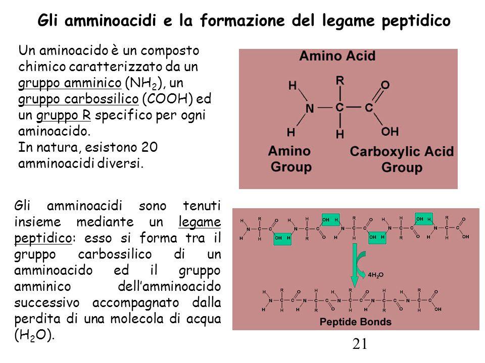 21 Un aminoacido è un composto chimico caratterizzato da un gruppo amminico (NH 2 ), un gruppo carbossilico (COOH) ed un gruppo R specifico per ogni aminoacido.