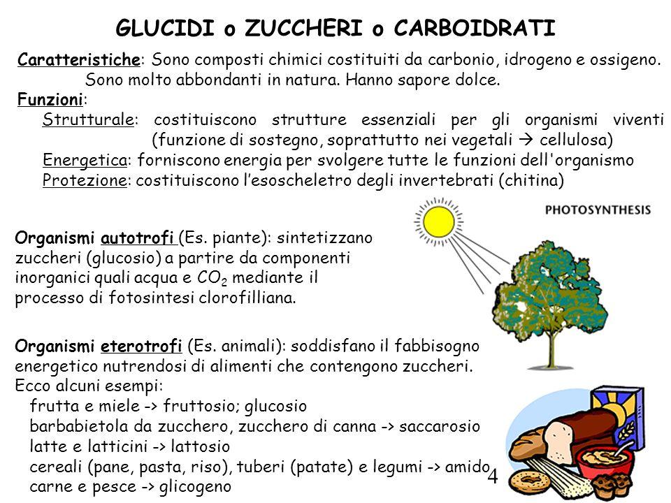 4 Caratteristiche: Sono composti chimici costituiti da carbonio, idrogeno e ossigeno.
