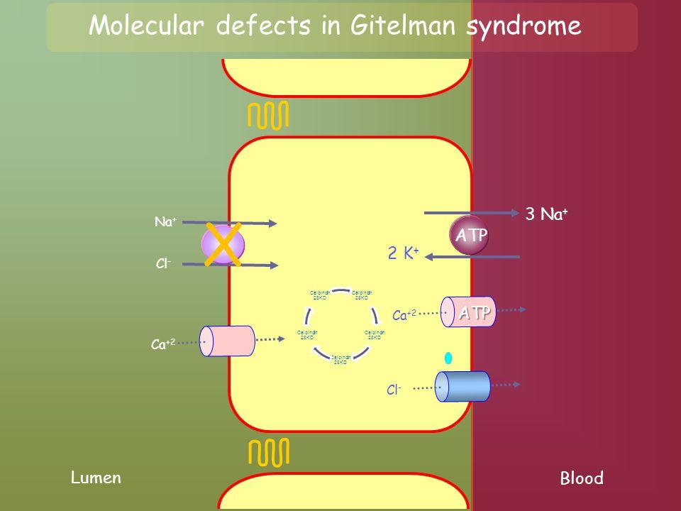 Lumen Blood Na + Cl - 3 Na + 2 K + ATP Cl - Ca +2 X Molecular defects in Gitelman syndrome Ca +2 ATP Calbindin 28KD
