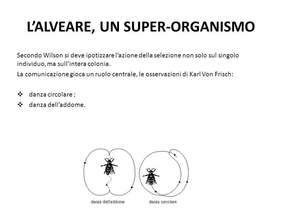 L'ALVEARE, UN SUPER-ORGANISMO Secondo Wilson si deve ipotizzare l'azione della selezione non solo sul singolo individuo, ma sull'intera colonia. La co
