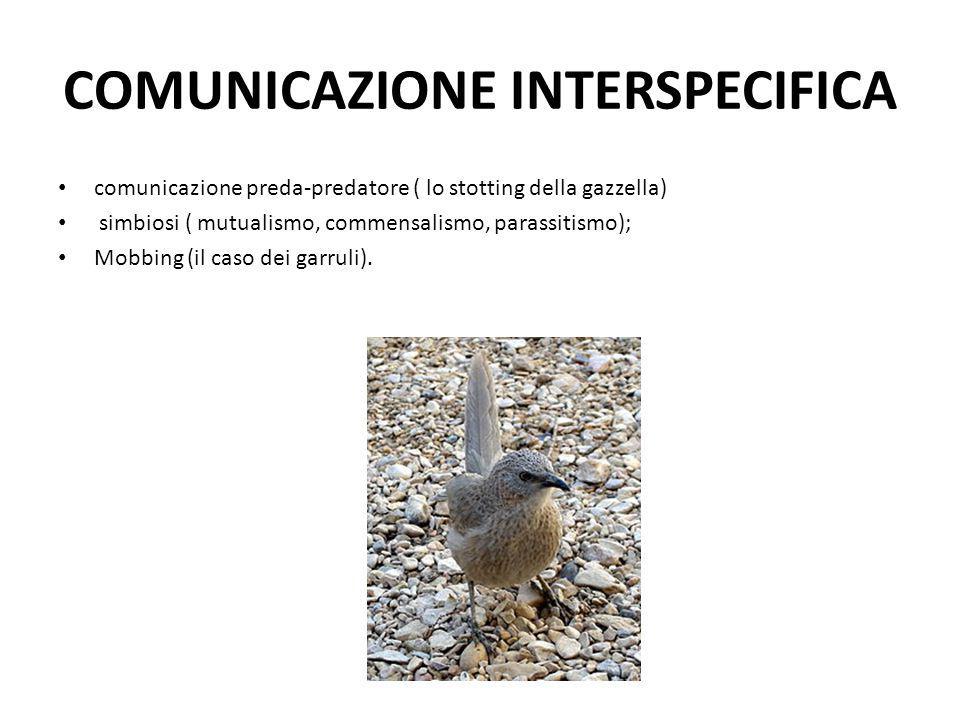 COMUNICAZIONE INTERSPECIFICA comunicazione preda-predatore ( lo stotting della gazzella) simbiosi ( mutualismo, commensalismo, parassitismo); Mobbing