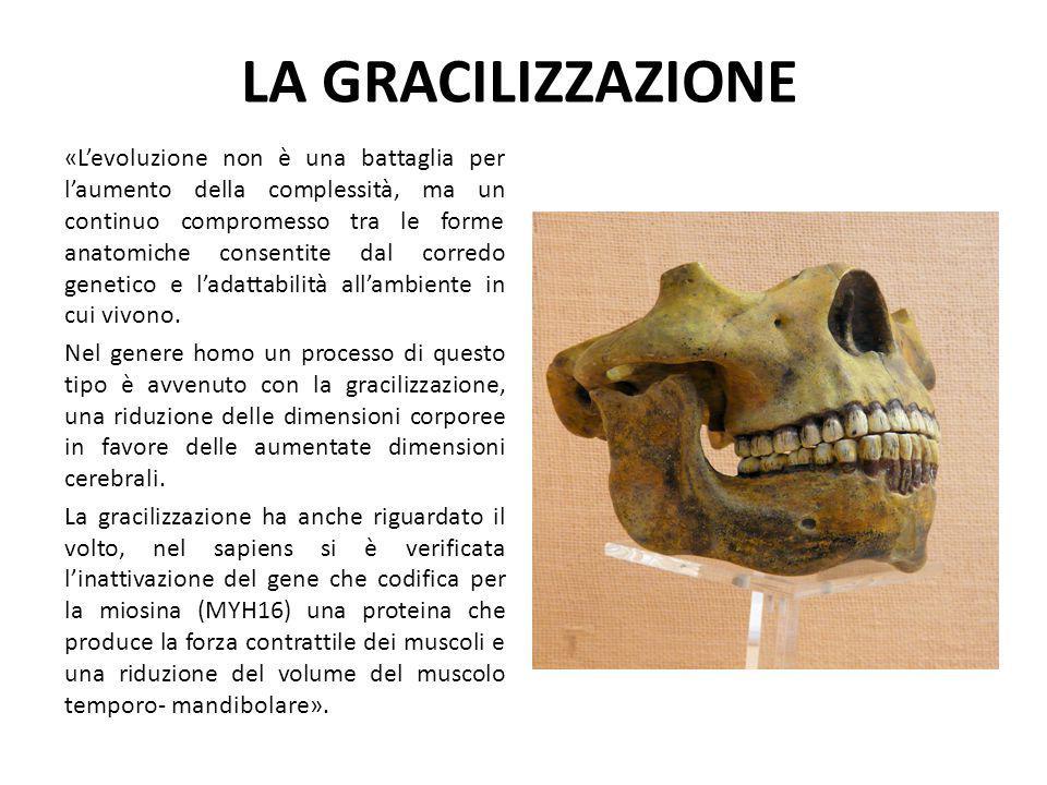 LA GRACILIZZAZIONE «L'evoluzione non è una battaglia per l'aumento della complessità, ma un continuo compromesso tra le forme anatomiche consentite da