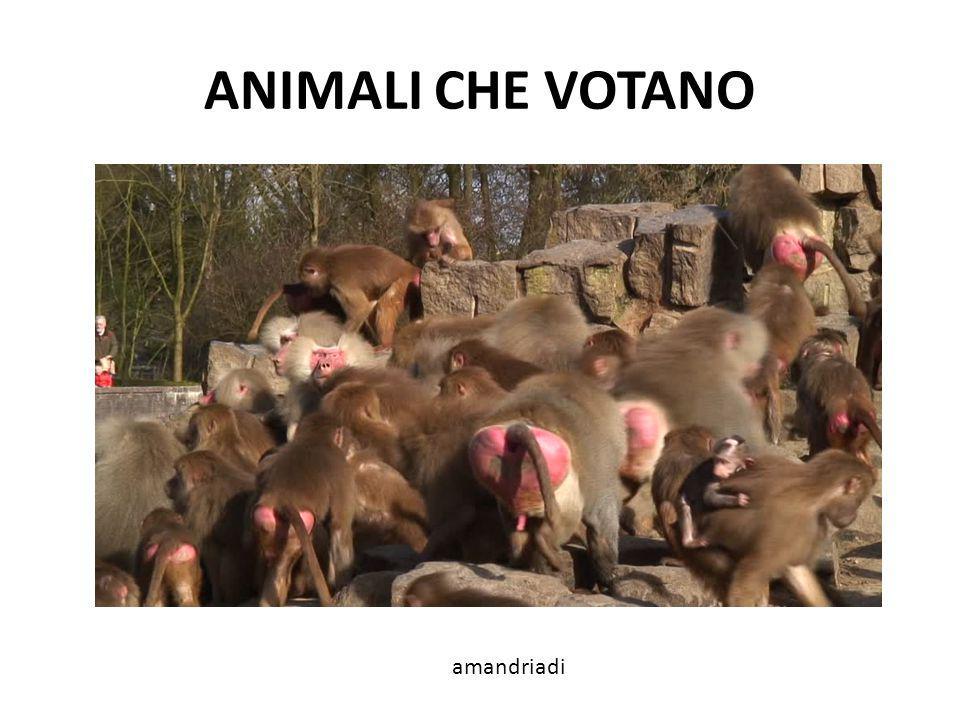 ANIMALI CHE VOTANO amandriadi