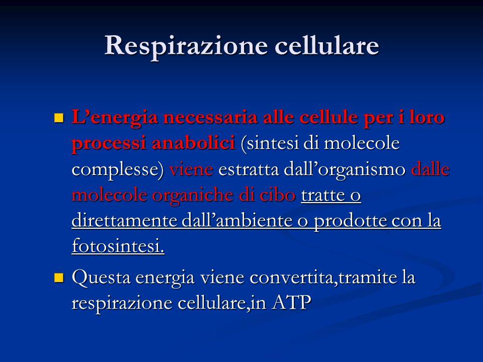 Respirazione cellulare L'energia necessaria alle cellule per i loro processi anabolici (sintesi di molecole complesse) viene estratta dall'organismo d