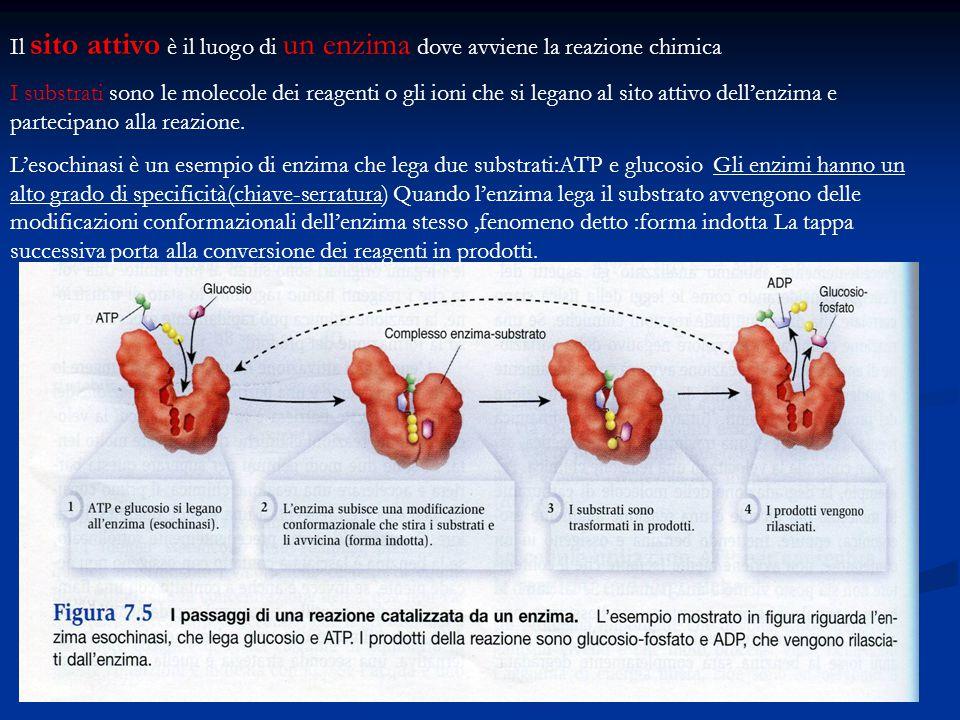 Il sito attivo è il luogo di un enzima dove avviene la reazione chimica I substrati sono le molecole dei reagenti o gli ioni che si legano al sito att