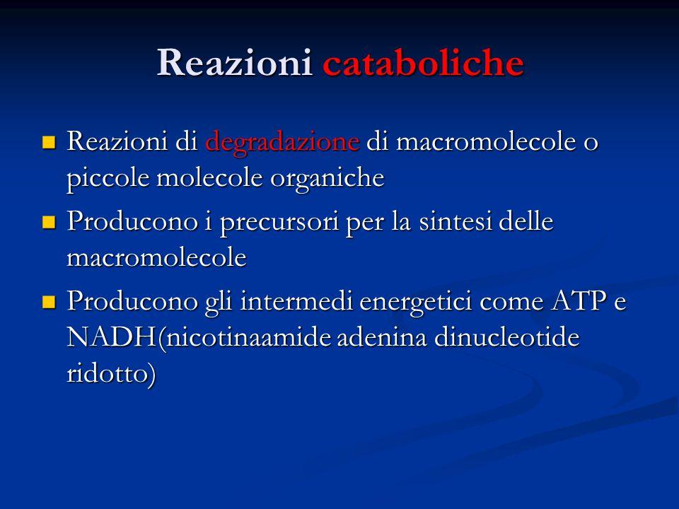 Reazioni cataboliche Reazioni di degradazione di macromolecole o piccole molecole organiche Reazioni di degradazione di macromolecole o piccole moleco