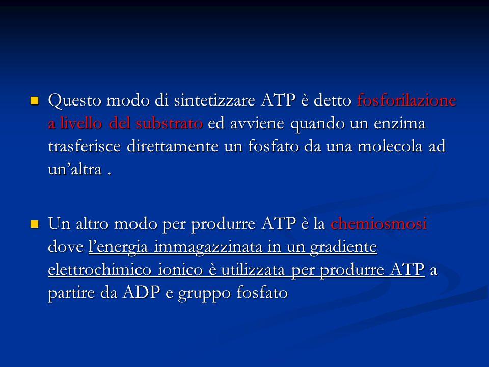 Questo modo di sintetizzare ATP è detto fosforilazione a livello del substrato ed avviene quando un enzima trasferisce direttamente un fosfato da una