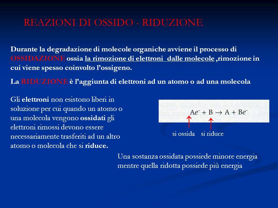 REAZIONI DI OSSIDO - RIDUZIONE Durante la degradazione di molecole organiche avviene il processo di OSSIDAZIONE ossia la rimozione di elettroni dalle