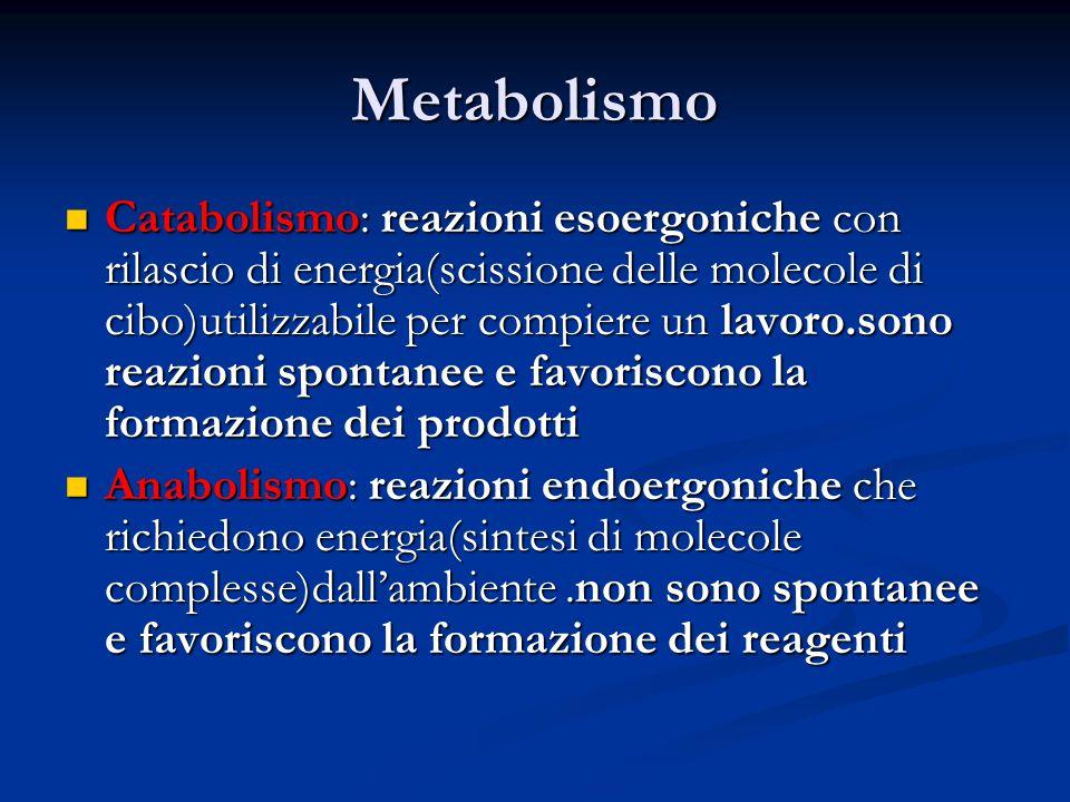 Metabolismo Catabolismo: reazioni esoergoniche con rilascio di energia(scissione delle molecole di cibo)utilizzabile per compiere un lavoro.sono reazi