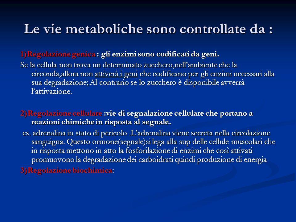 Le vie metaboliche sono controllate da : 1)Regolazione genica : gli enzimi sono codificati da geni. Se la cellula non trova un determinato zucchero,ne