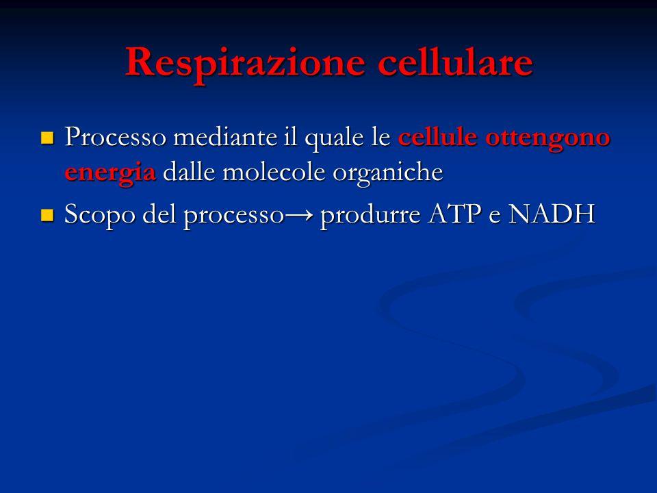 Respirazione cellulare Processo mediante il quale le cellule ottengono energia dalle molecole organiche Processo mediante il quale le cellule ottengon