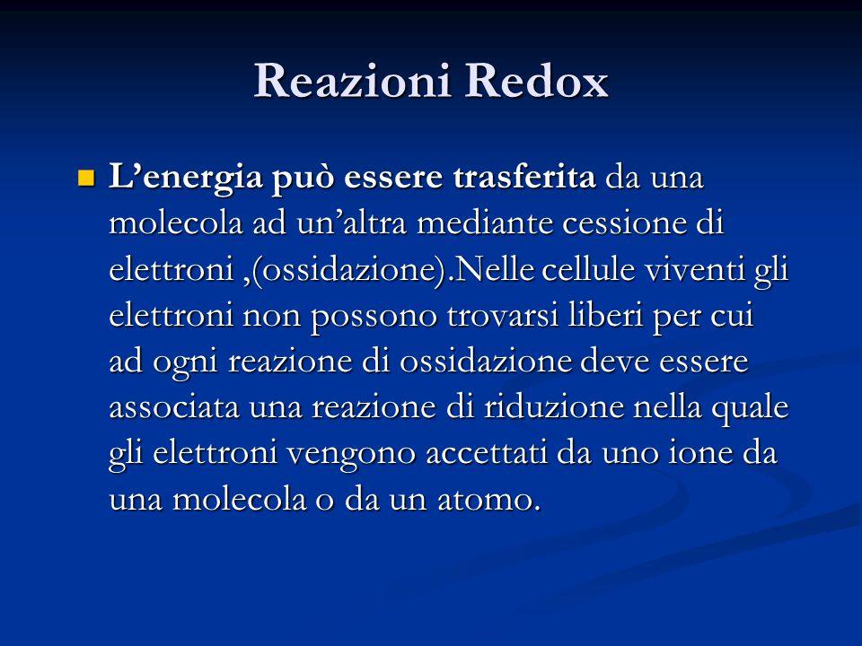 Reazioni Redox L'energia può essere trasferita da una molecola ad un'altra mediante cessione di elettroni,(ossidazione).Nelle cellule viventi gli elet