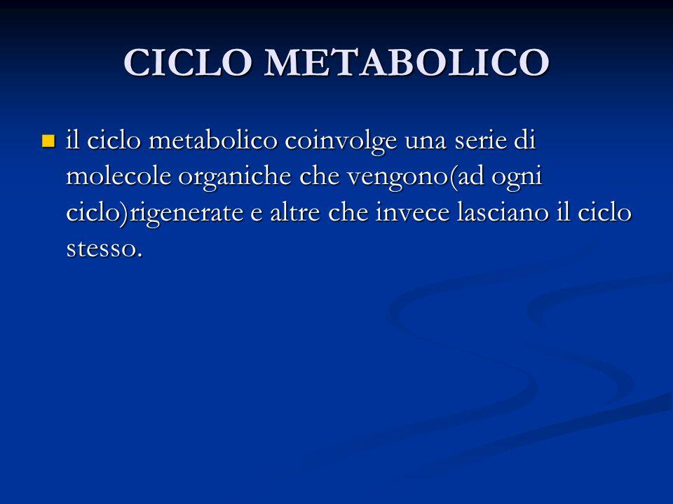 CICLO METABOLICO il ciclo metabolico coinvolge una serie di molecole organiche che vengono(ad ogni ciclo)rigenerate e altre che invece lasciano il cic