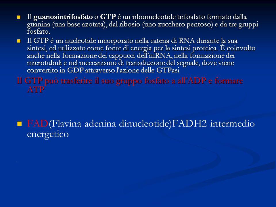 Il guanosintrifosfato o GTP è un ribonucleotide trifosfato formato dalla guanina (una base azotata), dal ribosio (uno zucchero pentoso) e da tre grupp