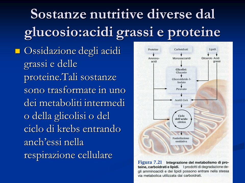 Sostanze nutritive diverse dal glucosio:acidi grassi e proteine Ossidazione degli acidi grassi e delle proteine.Tali sostanze sono trasformate in uno