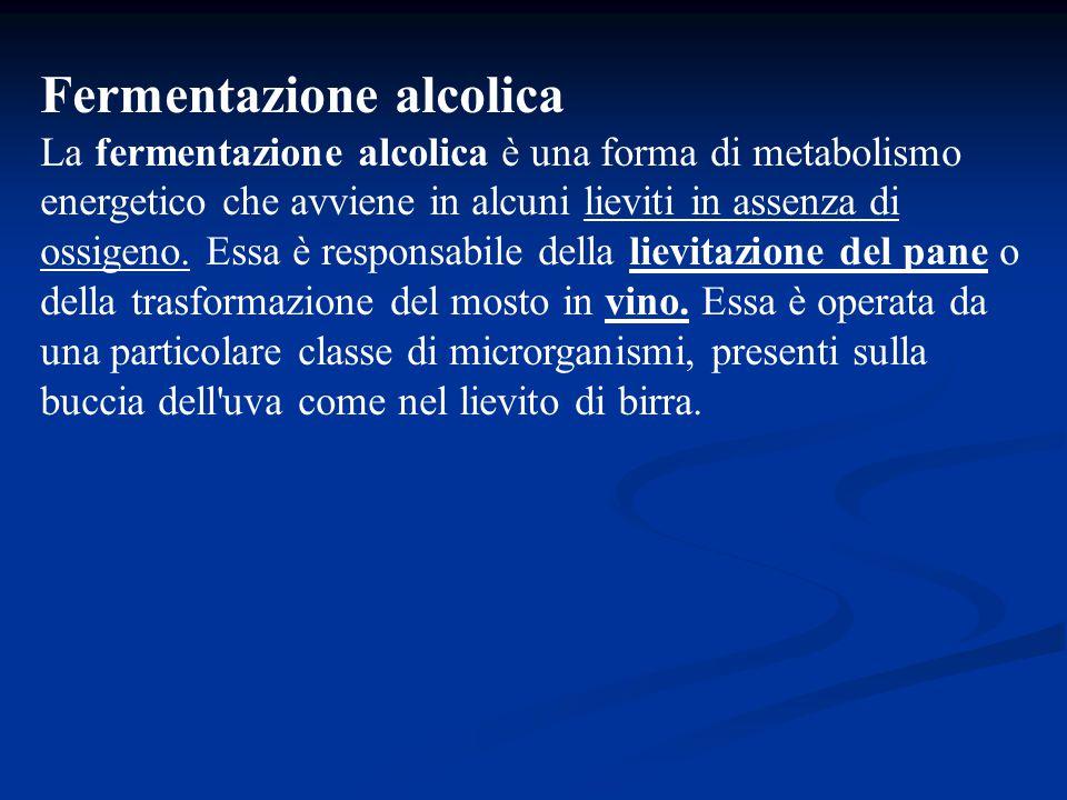 Fermentazione alcolica La fermentazione alcolica è una forma di metabolismo energetico che avviene in alcuni lieviti in assenza di ossigeno. Essa è re