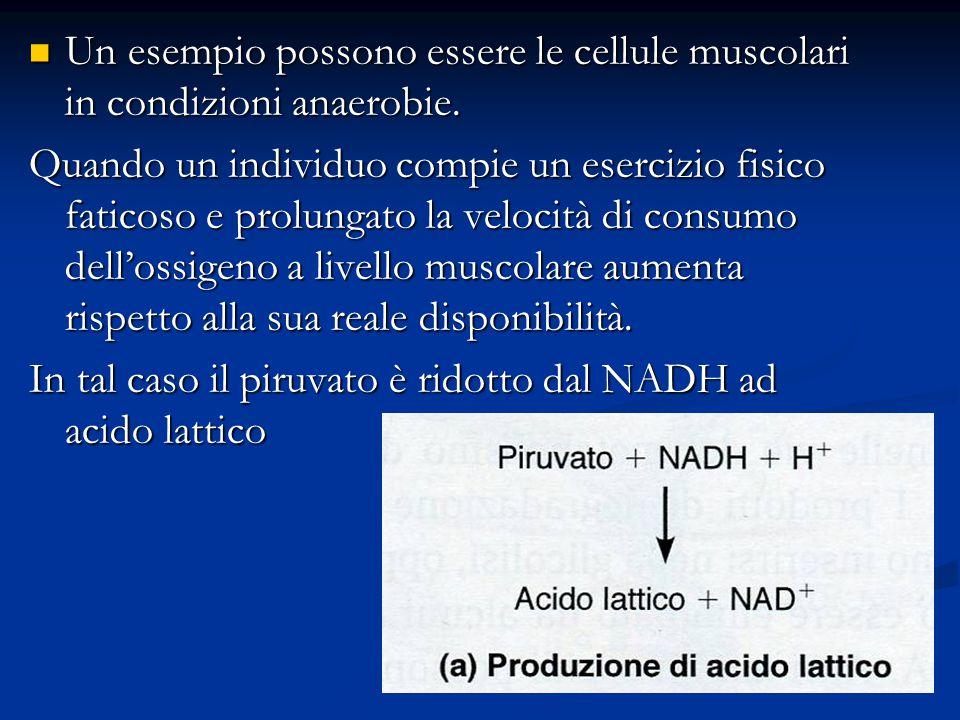 Un esempio possono essere le cellule muscolari in condizioni anaerobie. Un esempio possono essere le cellule muscolari in condizioni anaerobie. Quando