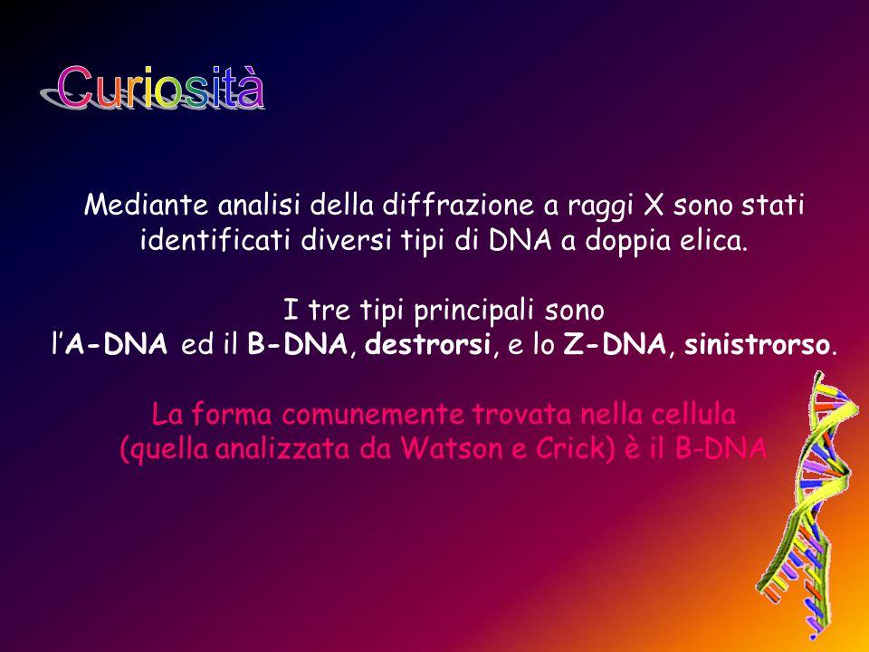 Mediante analisi della diffrazione a raggi X sono stati identificati diversi tipi di DNA a doppia elica. I tre tipi principali sono l'A-DNA ed il B-DN