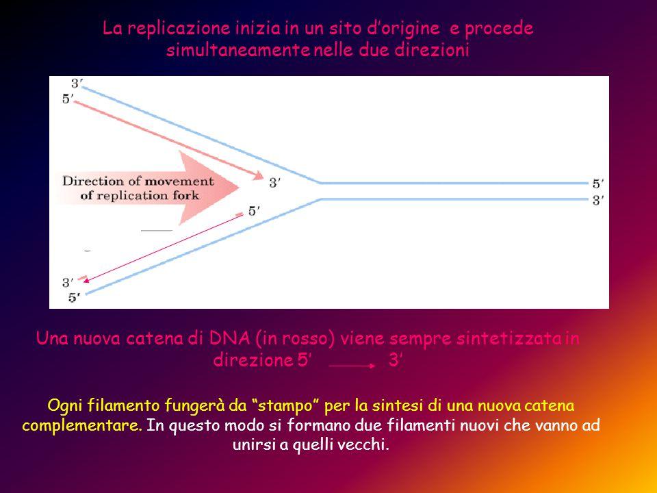 La replicazione inizia in un sito d'origine e procede simultaneamente nelle due direzioni Una nuova catena di DNA (in rosso) viene sempre sintetizzata