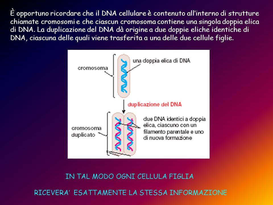 È opportuno ricordare che il DNA cellulare è contenuto all'interno di strutture chiamate cromosomi e che ciascun cromosoma contiene una singola doppia