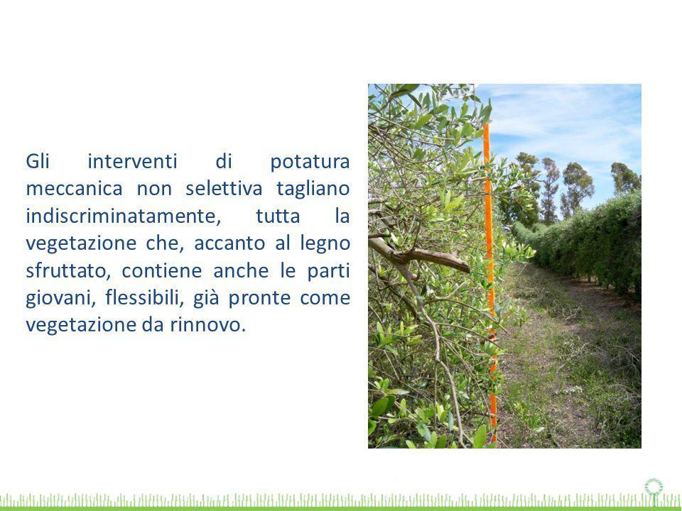 Gli interventi di potatura meccanica non selettiva tagliano indiscriminatamente, tutta la vegetazione che, accanto al legno sfruttato, contiene anche