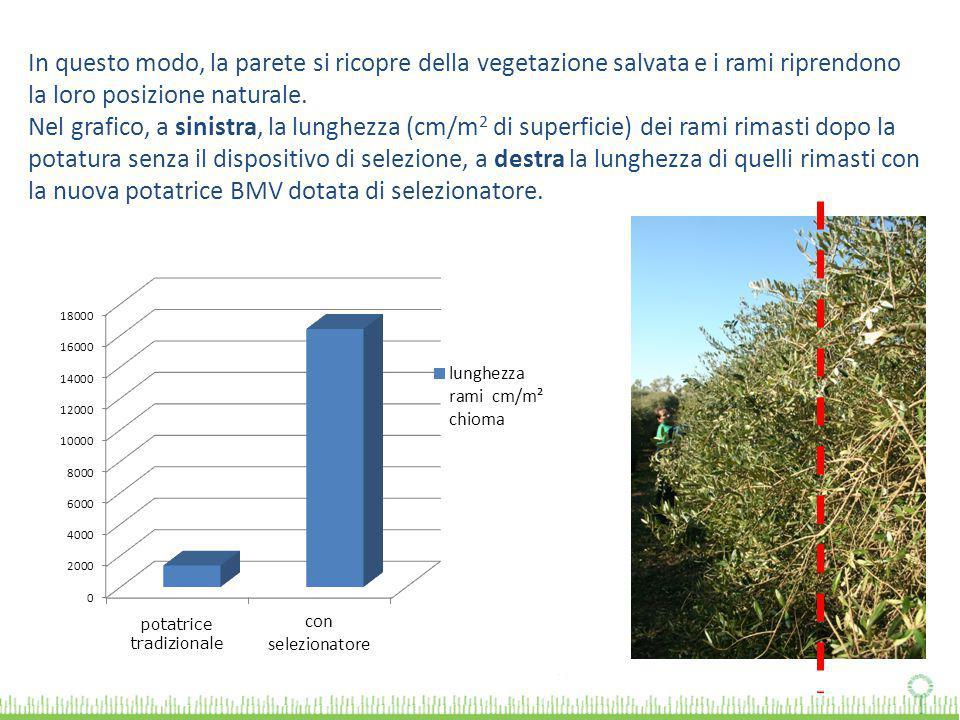In questo modo, la parete si ricopre della vegetazione salvata e i rami riprendono la loro posizione naturale. Nel grafico, a sinistra, la lunghezza (