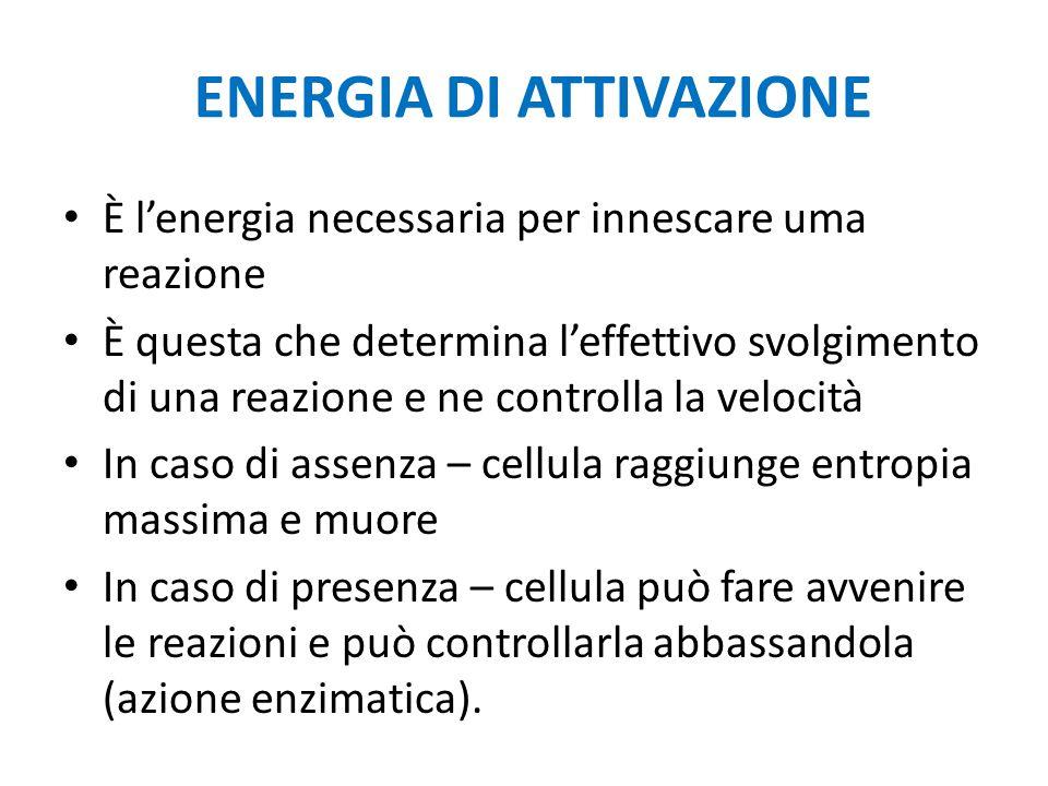ENERGIA DI ATTIVAZIONE È l'energia necessaria per innescare uma reazione È questa che determina l'effettivo svolgimento di una reazione e ne controlla