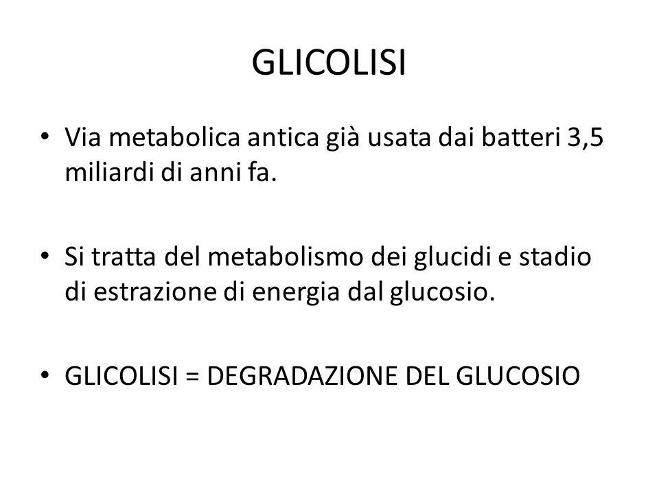 GLICOLISI Via metabolica antica già usata dai batteri 3,5 miliardi di anni fa. Si tratta del metabolismo dei glucidi e stadio di estrazione di energia