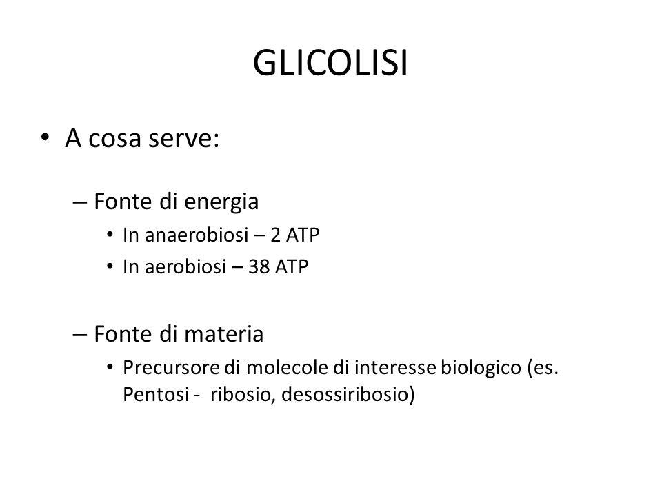 GLICOLISI A cosa serve: – Fonte di energia In anaerobiosi – 2 ATP In aerobiosi – 38 ATP – Fonte di materia Precursore di molecole di interesse biologi