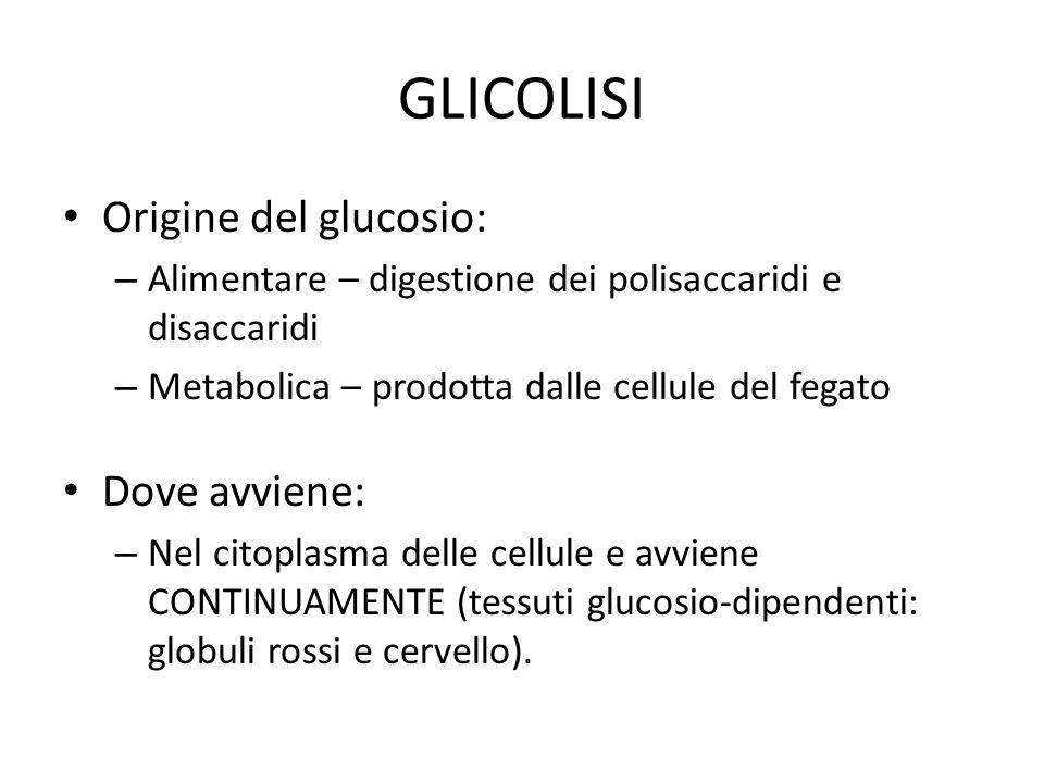 GLICOLISI Origine del glucosio: – Alimentare – digestione dei polisaccaridi e disaccaridi – Metabolica – prodotta dalle cellule del fegato Dove avvien