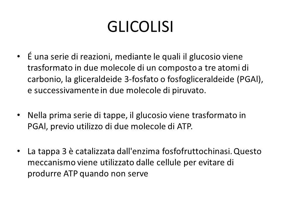 GLICOLISI É una serie di reazioni, mediante le quali il glucosio viene trasformato in due molecole di un composto a tre atomi di carbonio, la gliceral
