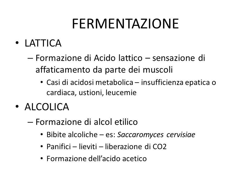FERMENTAZIONE LATTICA – Formazione di Acido lattico – sensazione di affaticamento da parte dei muscoli Casi di acidosi metabolica – insufficienza epat